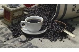 Кофе улучшает работу мозга, сжигает жир и не только